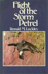 Image of FLIGHT OF THE STORM PETREL